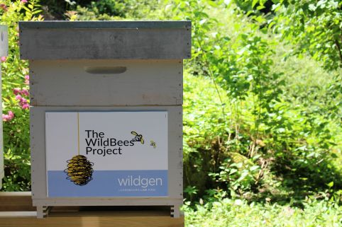 Wildgen 4 Environment: The WildBees Project